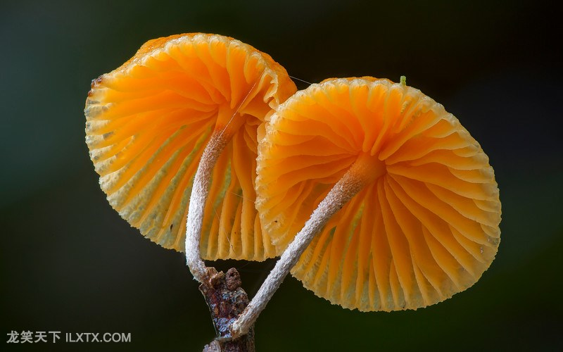 Steve Axford摄影作品:真菌 摄影精品.