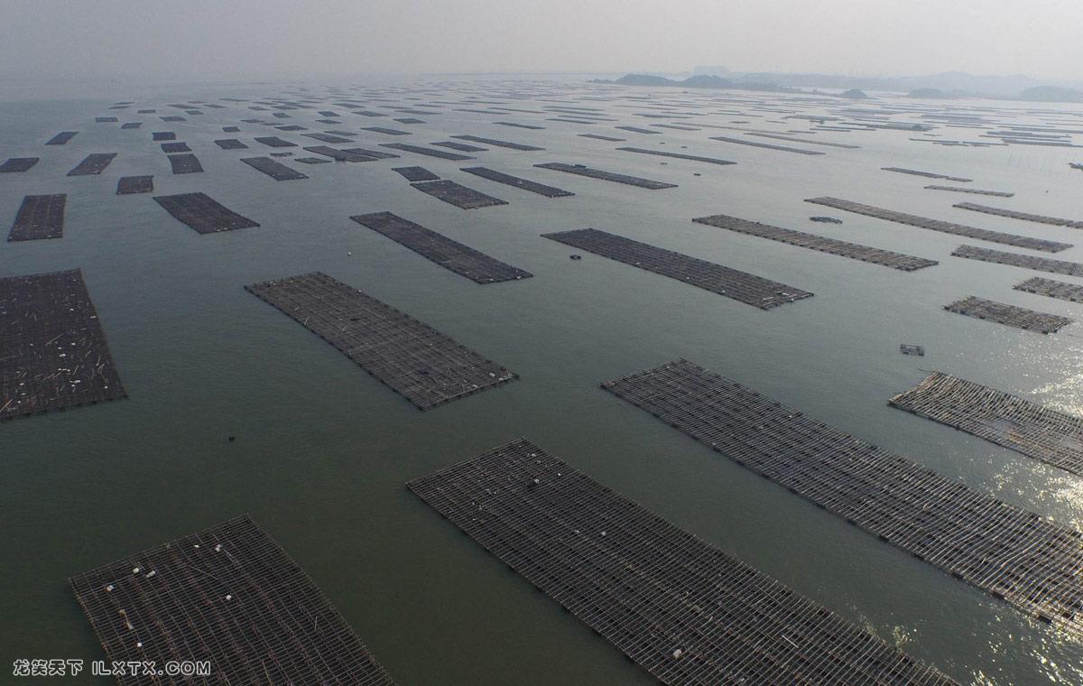 广西壮族自治区钦州市的大蚝牡蛎养殖场 - 20151021